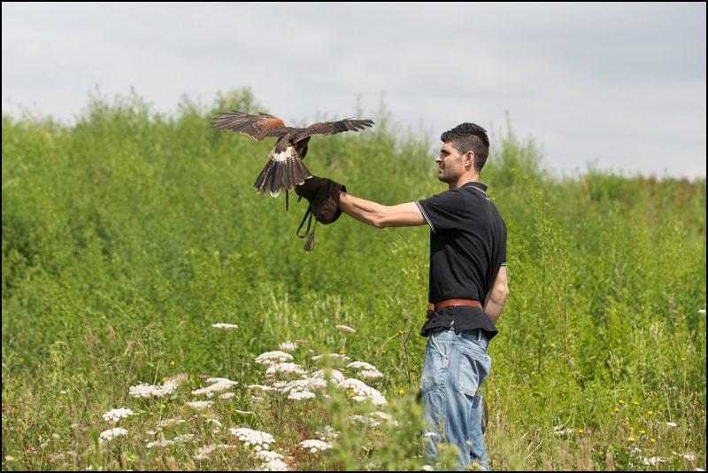 Faucon avec le fauconnier