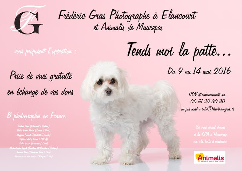 affiche shooting photo animalier