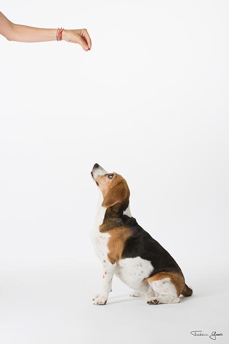 photographe animaux de compagnie